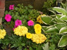 My Garden of Peace. Flowers from my front and backyard