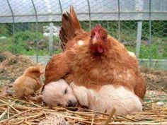 animalwonderlife: Top 50 Cute Animal pics! Click here: … http://ift.tt/1umTmq9