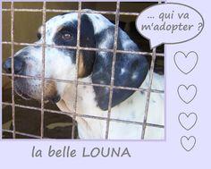 https://refugecaninlotois.wordpress.com/2015/09/01/louna-nouvelles-photos/