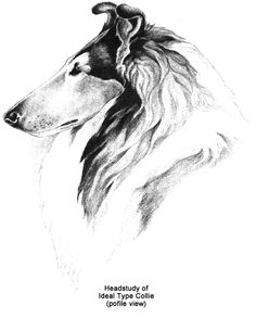 Collie Club Of America: Illustrated Standard