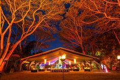 Cairns Flames of the Forest Dining Experience - Cairns & the Tropical North | Viator