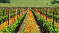 California Wine Country Culinary Tour