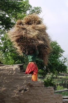 A woman farmer in India carrying a heavy & bulky load, India