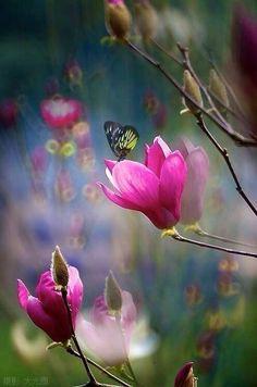 #butterfly #flowers