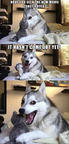 14 Best Jokes From Pun Husky - Jokes - Funny memes - - Why Did Mozart Killed His Chicken? The post 14 Best Jokes From Pun Husky appeared first on Gag Dad. Pun Husky, Husky Jokes, Dog Jokes, Puns Jokes, Corny Jokes, Animal Jokes, Funny Animal Memes, Funny Puns, Memes Humor