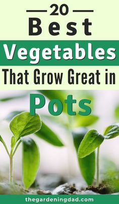 Are you interested in Growing Vegetables in Pots or Containers? Learn about the 20 BEST Vegetables that Grow Great in Pots! Are you interested in Growing Vegetables in Pots or Containers? Learn about the 20 BEST Vegetables that Grow Great in Pots!