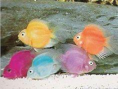 jellybean parrot fish