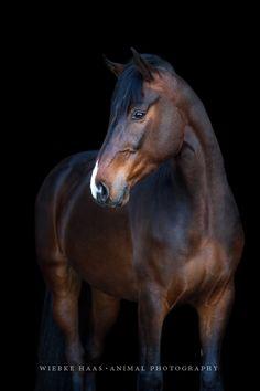 Pferd, Pferde, Warmblut, Pferdefotografie Mehr
