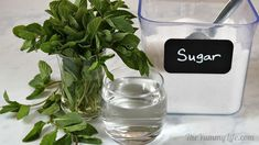 Use this syrup to add refreshing mint flavor to cocktails, hot cocoa, lemonade, sparkling water, hot and cold tea. Mint Simple Syrup, Kitchen Twine, Cocktail Mixers, Cocktails, Drinks, Iced Tea, Mojito, 3 Ingredients, Vegan Gluten Free
