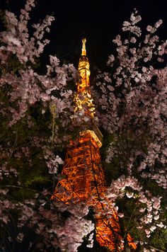 ~ ❤ ~ BEAUTIFUL PLACES ~ ❤ ~  *Cherry tree in full bloom*Tokyo Tower, Japan*