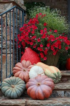 Red flower garden with elegant pumpkins, lovely display for fall.