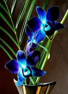 Fantastic Photographs blue Orchids Concepts Orchid, some sort of floral regarding attractiveness and also magnificence natural beauty, features through 7 Rare Flowers, Blooming Flowers, Exotic Flowers, Beautiful Flowers, Orchid Flowers, Dendrobium Orchids, Purple Orchids, Purple Roses, Blue Orchid Tattoo