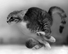 A cat runs at 40 kilometers an hour - Katzen - Chien Animals And Pets, Baby Animals, Funny Animals, Cute Animals, I Love Cats, Crazy Cats, Cool Cats, Beautiful Cats, Animals Beautiful