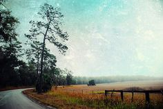 Chinsegut Hill by Beverly Stapleton  Click image to purchase an art print at Fine Art America.