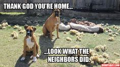 thank-god-youre-home-look-what-the-neighbors-did.jpg 620×349 pixels