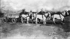 "Pennsylvania Conestoga Wagon, circa 1890. Six white horses are hitched to a covered wagon with an advertising sign hanging from it. Credit: Image donated by Corbis - Bettmann In the late 1890s a photographer took this picture of an old Conestoga wagon hitched to a six-horse team with a sign boasting ""Philadelphia to Pittsburgh in 20 days."""
