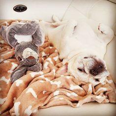 Uma vida de cão  Follow: @odonocuida . . #dog #dogsofinstagram #dogs #instadog #dogstagram #doglover #ilovemydog #dogoftheday #lovedogs #dogsofinsta #instagramdogs #doglife #doglovers #dogsofig #cutedog #doglove #dogslife #caesdeportugal #caesdosportugueses #puppylove #petstagram #instapets #cutepets #pets #puppydog #cutedogs #portugal