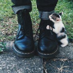#kitten #cute #goth #docmartens