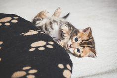 Cute kitten by juhku.deviantart.com on @DeviantArt