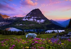 """""""If it isn't God's backyard, then he certainly lives nearby."""" - Robin Williams on Glacier National Park."""