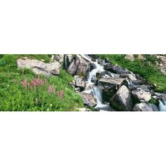 Alpine garden near cascade waterfall Prospectors Peak Grand Teton National Park Wyoming USA Canvas Art - Panoramic Images (36 x 12)
