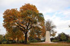 Tree next to the war memorial in Brenchley Gardens, Maidstone.