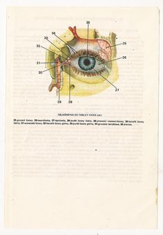 2 Vintage Anatomical Prints Eye Medical by FromEuropeWithLove, $5.90