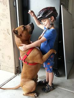 """This 4 year old taught the dog a new trick. He calls it """"Big Hug"""" - Imgur"""