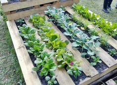 Grow plants in wood pallet garden frames