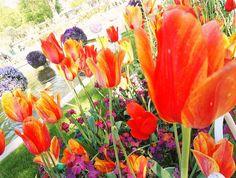 #flowers at #Tivoli #copenhagen #denmark . . . . . . .. #denmark #travel #europe #spring #summer #photoofday #colour #colorful