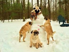 this are just some pugs building a snow pug, totally normal ;-)
