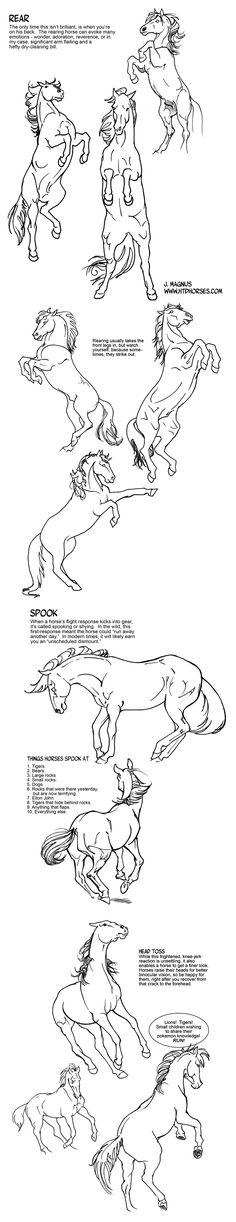 Horse Rearing and Spooking Tutorial by sketcherjak.deviantart.com on @deviantART