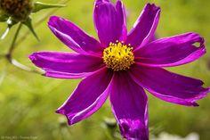 Facebook Photos, Plants, Lilac Color, Angel, Plant, Planets