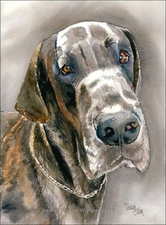 GREAT DANE BRINDLE Dog 15x11 Giclee Watercolor Print by k9stein, $40.00