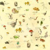 Charles Darwin - lisa_brown - Spoonflower