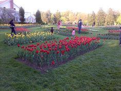 Tulip Garden, Elizabeth Park, Hartford, CT