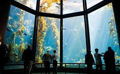 Monterey Bay Aquarium. Can't believe I've never been here!