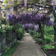 Botanical Garden of Trieste (small university garden) - Trieste, Italy