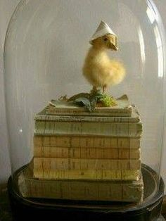 Awwww baby duck with a hat on a stack of books.