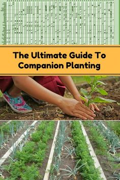 Complete Guide To Companion Planting - Check out this article and just see what plants you should be growing togther and which ones should be far away from each other.