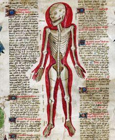 John Arderne, De arte phisicali et de cirurgia, England ca. 1425 #skullnique #loveskulls #skull #skulls #fashion #skulllover #skeleton