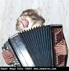 cats & accordions <--forever.