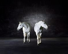 Double Exposure: New Photography curated by Rebecca Wilson. Check out this collection of art on Saatchi Online. #art