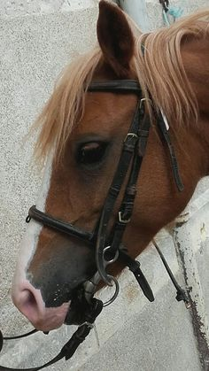 Bijdus Horses, Animals, Animaux, Horse, Animal, Animales, Animais