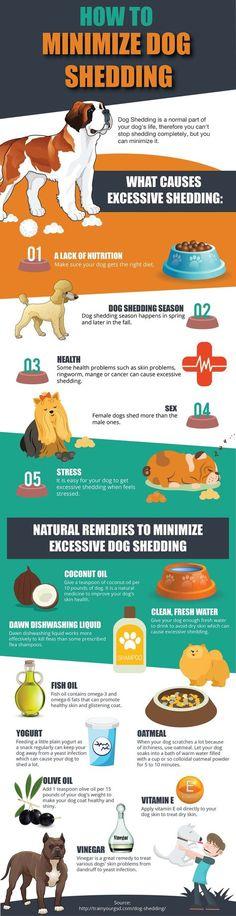 Pupy Training Treats - 9 Ways To Reduce Dog Shedding - Infographic // KaufmannsP. Pupy Training Treats - 9 Ways To Reduce Dog Shedding - Infographic // KaufmannsPuppyTra. Food Dog, Dog Food Recipes, Dog Care Tips, Pet Care, Pet Tips, Stop Dog Shedding, Dog Shedding Remedies, Hair Shedding, Dog Training Tips