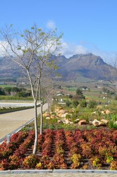 Cavalli Stud Farm and wine estate, Stellenbosch Provinces Of South Africa, Stud Farm, South African Wine, Visit South Africa, Wine Tourism, Countries Of The World, Holiday Destinations, Wine Country, Cape Town