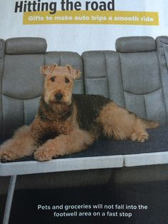 Skymiles Airedale cover