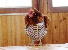 chicken clothes | Chicken Clothing | Golberz.Com