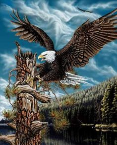 Hidden eagle images landing by Stephen Michael Gardner will expand your mind and balance your brain hemispheres.