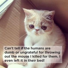 18 things cats would say - Can't tell if the humans are dumb or ungrateful for throwing out the mouse I killed for them. I even left it in their bed!